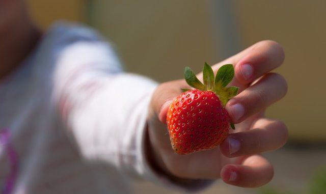 enfant qui tend une fraise