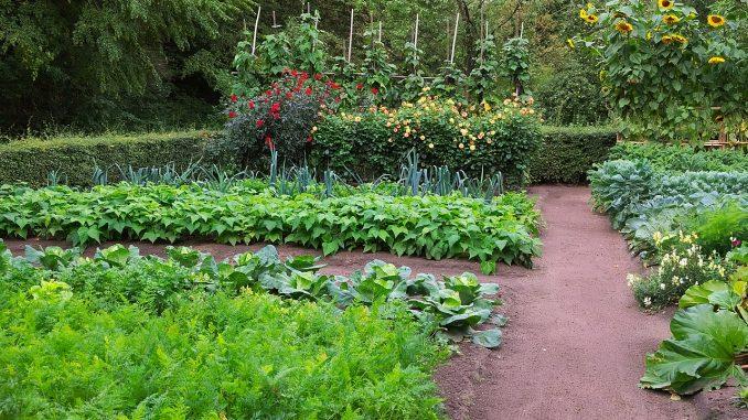 jardin potager eco-responsable